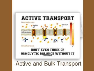 Active and Bulk Transport