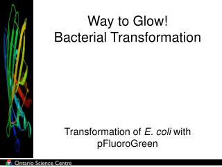 Way to Glow!  Bacterial Transformation