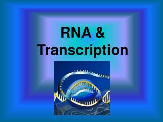 RNA & Transcription