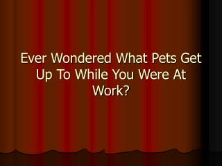 Ever Wondered What Pets Get Up To While You Were At Work?