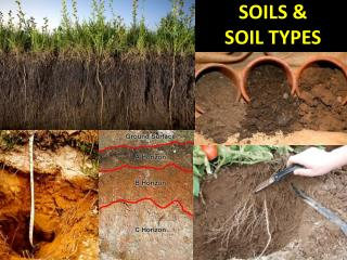 SOILS &  SOIL TYPES