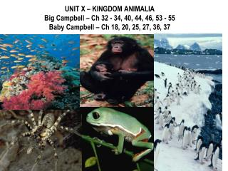 I.  ORIGINS OF KINGDOM ANIMALIA