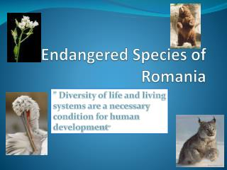 Endangered Species of Romania