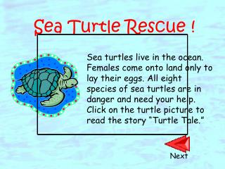 Sea Turtle Rescue !