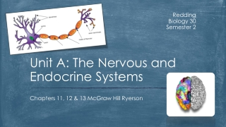 Unit A: The Nervous and Endocrine Systems