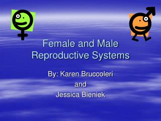 Female and Male Reproductive Systems
