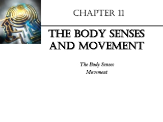 The Body Sense and Movement Chapter 11