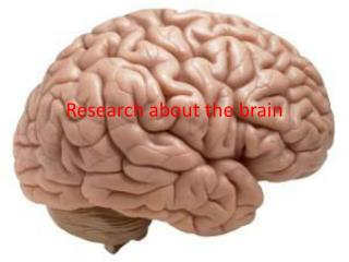 Research about the brain