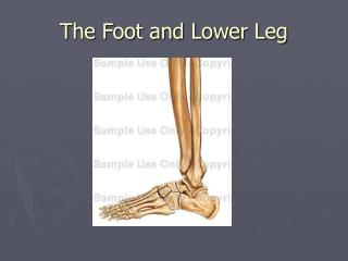 The Foot and Lower Leg