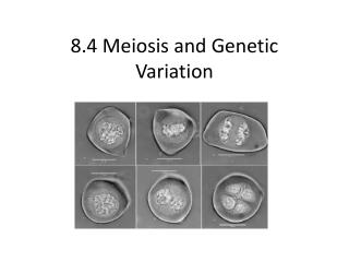 8.4 Meiosis and Genetic Variation