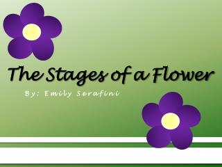 The Stages of a Flower