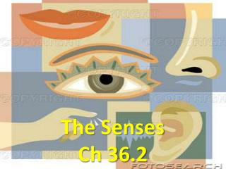The Senses Ch  36.2