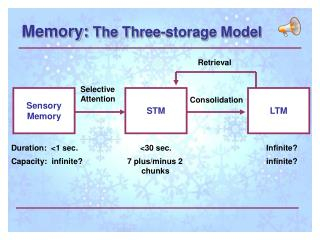 Memory:  The Three-storage Model