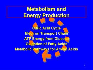 Metabolism and Energy Production