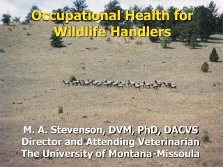 Occupational Health for Wildlife Handlers