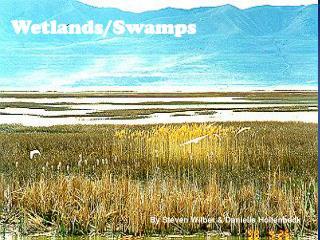 Wetlands/ Swamps
