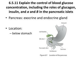Pancreas: exocrine and endocrine gland Location:  below stomach