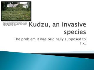 Kudzu, an invasive species