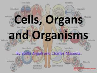Cells, Organs and Organisms