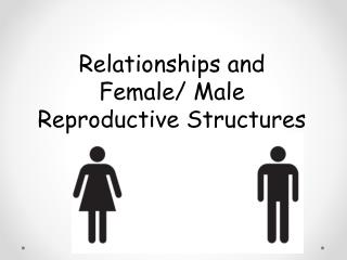 Relationships and  Female/ Male Reproductive Structures