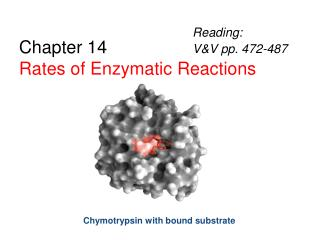Chapter 14 Rates of Enzymatic Reactions