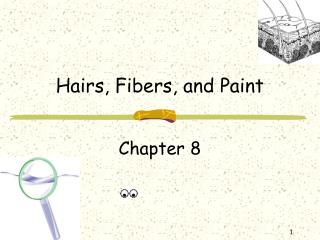 Hairs, Fibers, and Paint