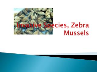 Invasive Species, Zebra Mussels