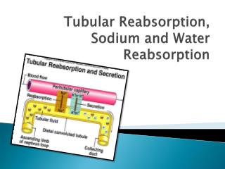 Tubular Reabsorption, Sodium and Water Reabsorption