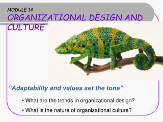 MODULE 14 ORGANIZATIONAL DESIGN AND CULTURE