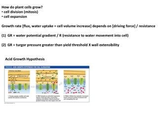 How do plant cells grow? cell division (mitosis) cell expansion