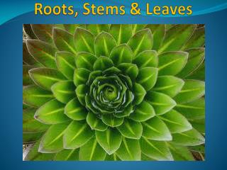 Roots, Stems & Leaves