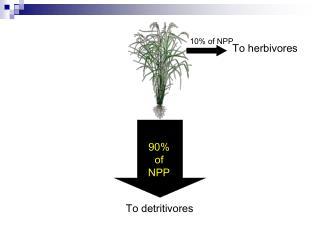10% of NPP