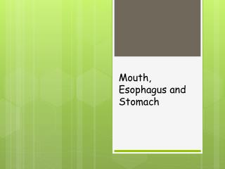 Mouth, Esophagus and Stomach