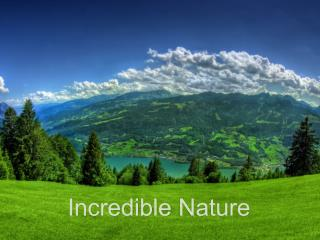 Incredible  Nature