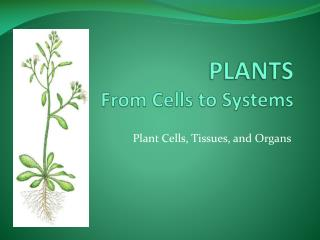 PLANTS From Cells to Systems