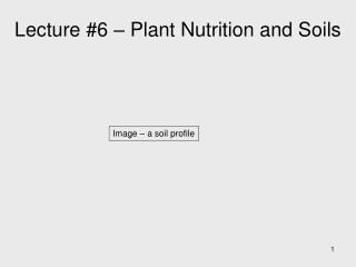 Lecture #6 – Plant Nutrition and Soils