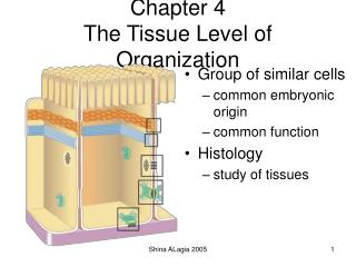 Chapter 4 The Tissue Level of Organization
