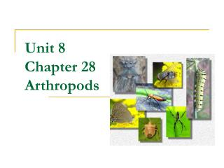 Unit 8 Chapter 28 Arthropods