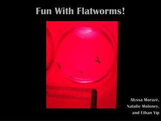 Fun With Flatworms!
