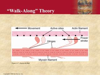 """Walk-Along"" Theory"