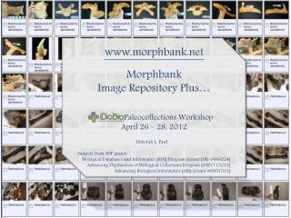morphbank Morphbank Image Repository Plus…           	Paleocollections Workshop