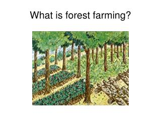 What is forest farming?