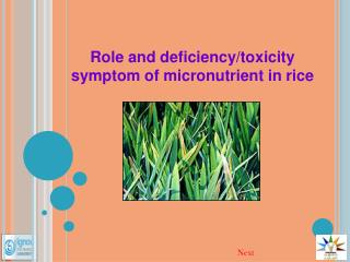 Role and deficiency/toxicity symptom of micronutrient in rice