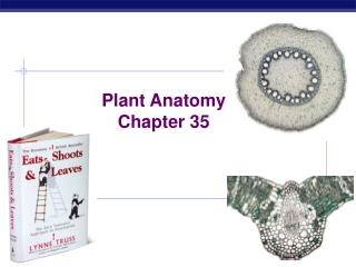 Plant Anatomy Chapter 35