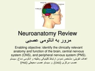 Neuroanatomy  Review ???? ?? ??????? ????