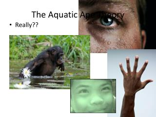 The Aquatic Ape Theory