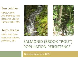 Salmonid  (Brook trout) population persistence