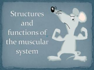 Structures  and functions of the muscular system