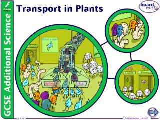 How do plants get what they need?