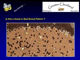 Is this a Good or Bad Brood Pattern ?